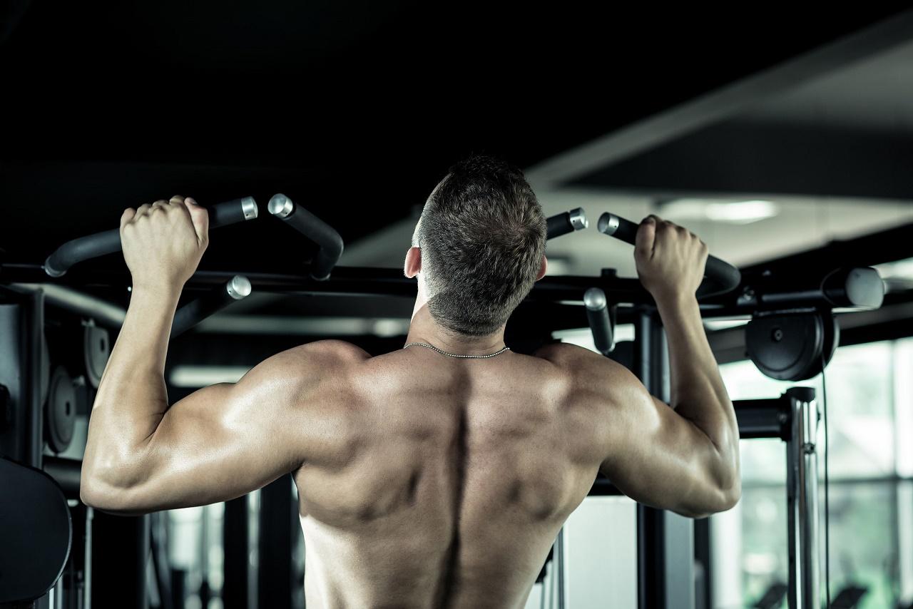Gym Exercise Fitness Donkey