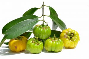 6 garcinia cambogia fruits with branches and leaves