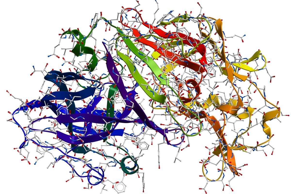 Pepsin enzyme structure