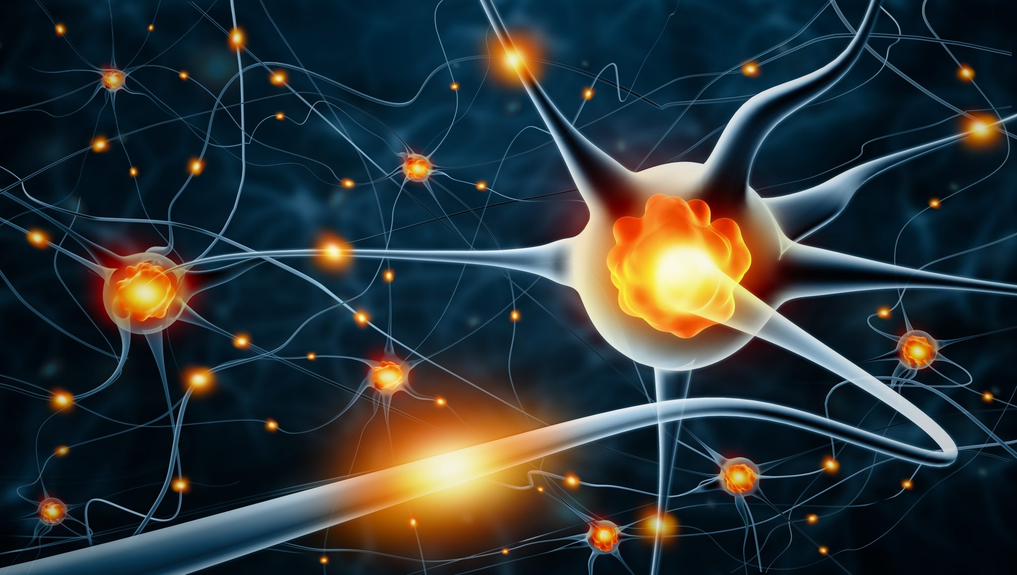nerve cells and neurotransmitters (top rated nootropics)